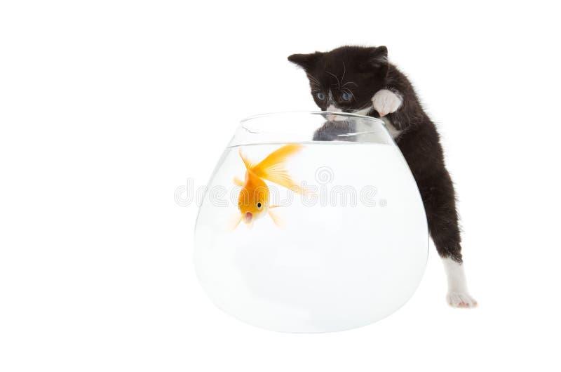 chaton de poissons photographie stock libre de droits