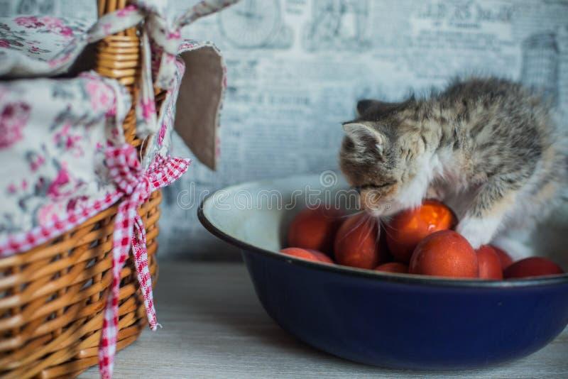 Chaton de thème de Pâques se reposant dans la grande tasse et soucoupe tissée photographie stock