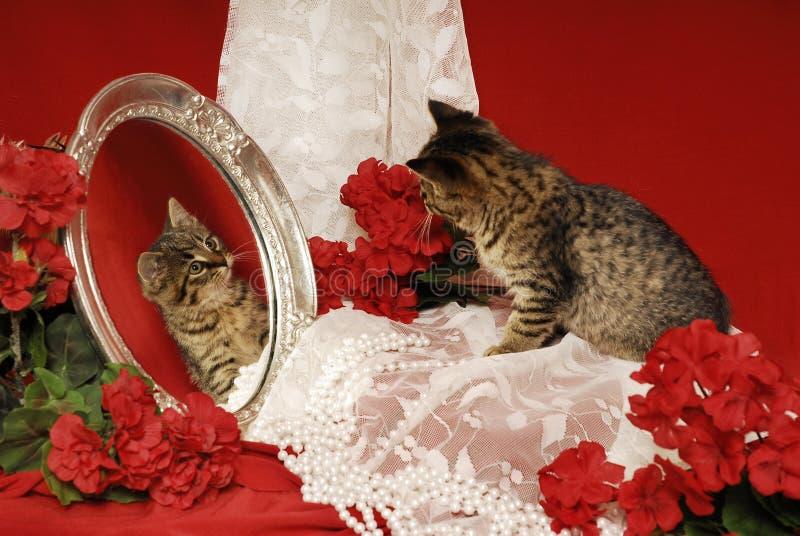 Chaton de tigre avec le miroir et les bégonias photo stock
