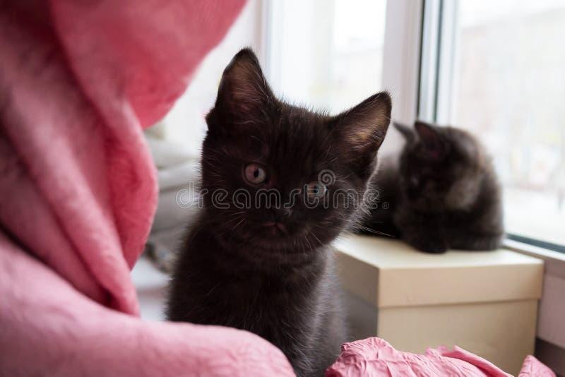 Chaton deux noir mignon se reposant sur une boîte sur le rebord de fenêtre photographie stock