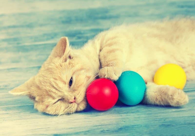 Chaton dormant avec les oeufs colorés photos libres de droits