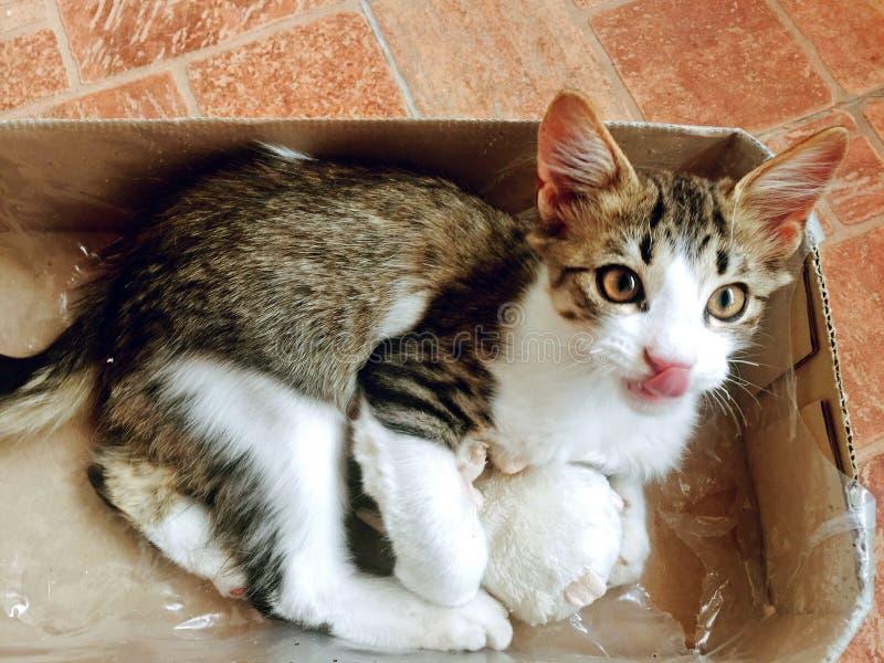Chaton doux et beau jouant avec la souris photographie stock