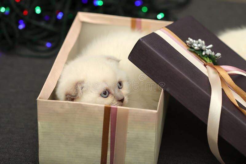 Chaton effrayé peu blanc dans un boîte-cadeau sur un fond de bokeh photo stock
