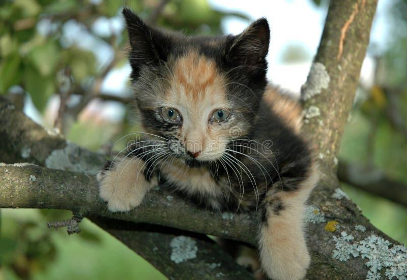Chaton effrayé sur l'arbre photos libres de droits
