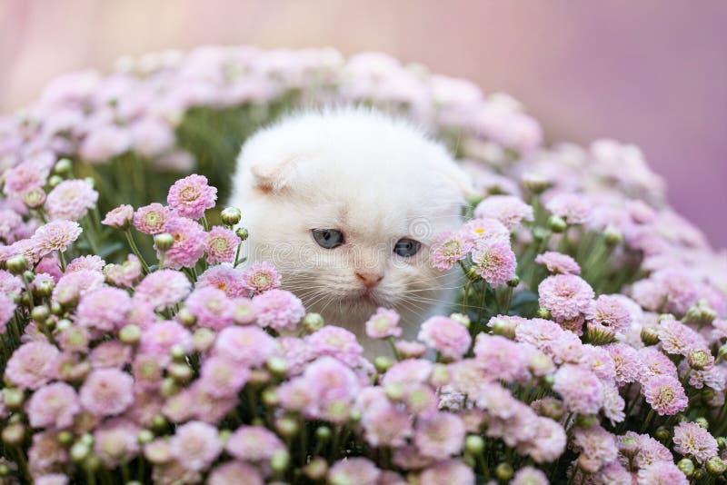 Chaton en fleurs images libres de droits