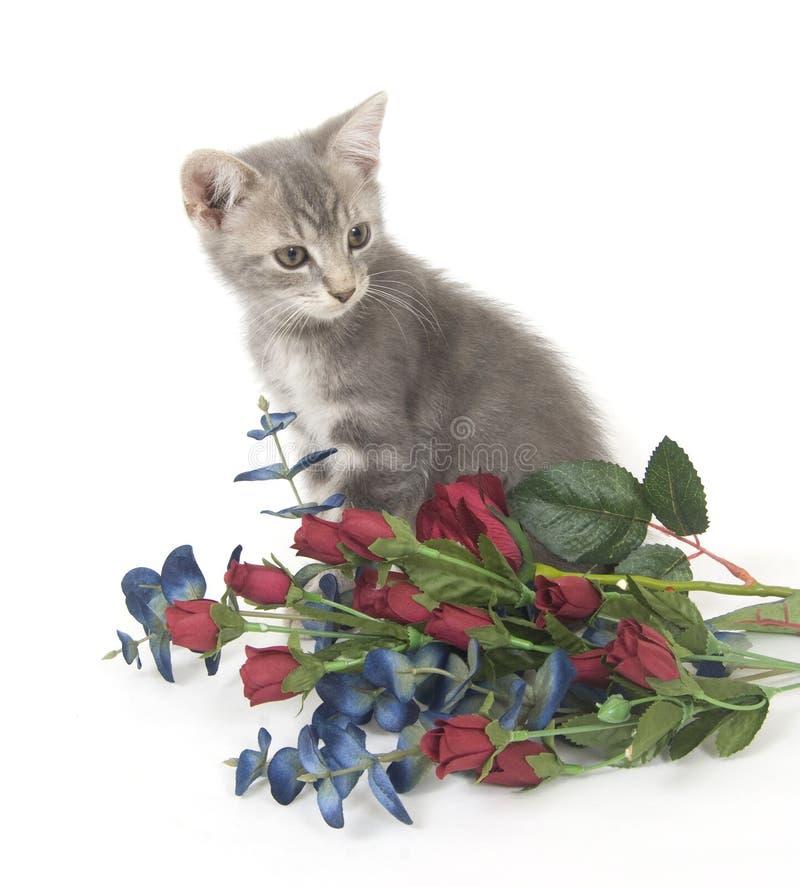 Chaton et fleurs gris images stock