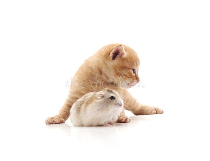 Chaton et hamster photographie stock libre de droits
