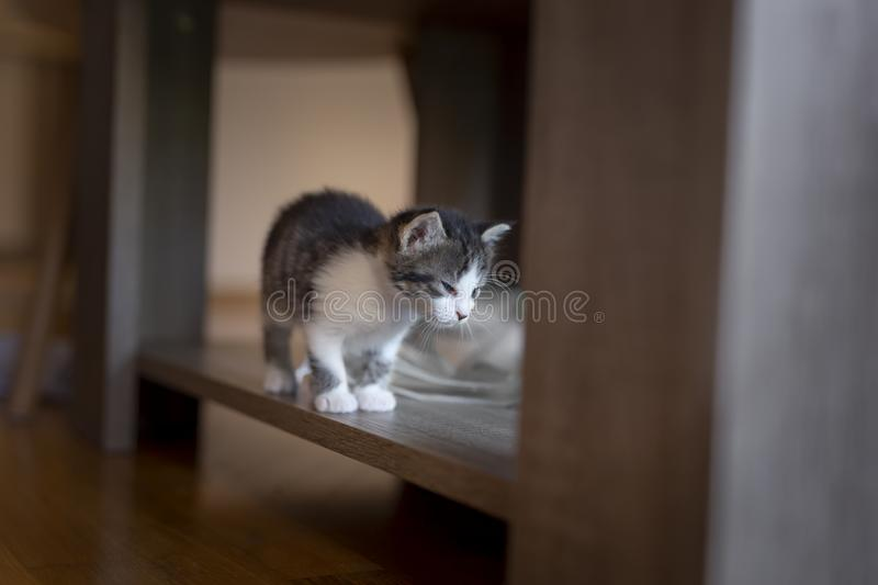 Chaton explorant sa nouvelle maison photo stock