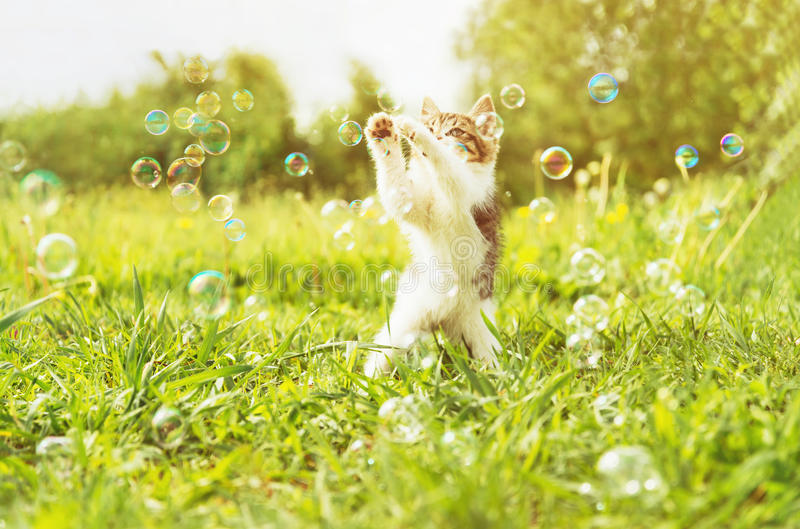 Chaton jouant avec des bulles de savon au jour ensoleillé photo stock