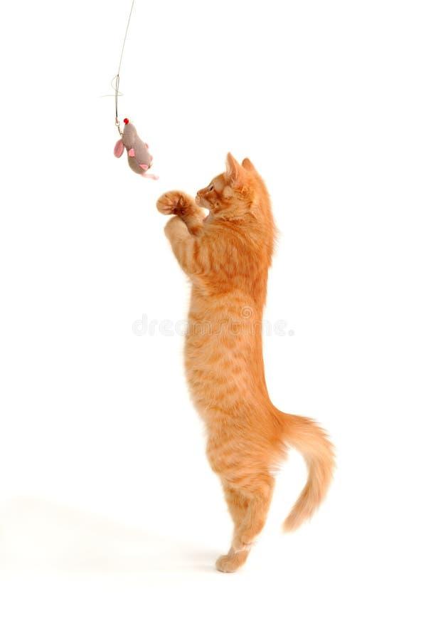Chaton jouant avec la souris de jouet photo stock
