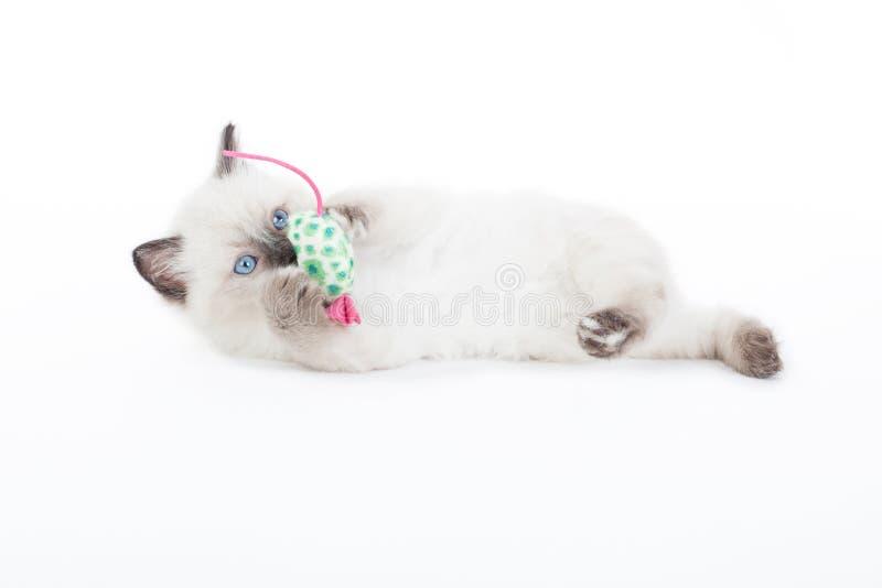 Chaton jouant avec la souris de jouet image libre de droits