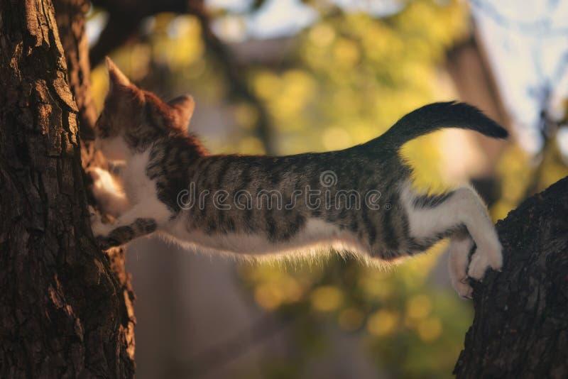 Chaton jouant dans l'arbre photos libres de droits