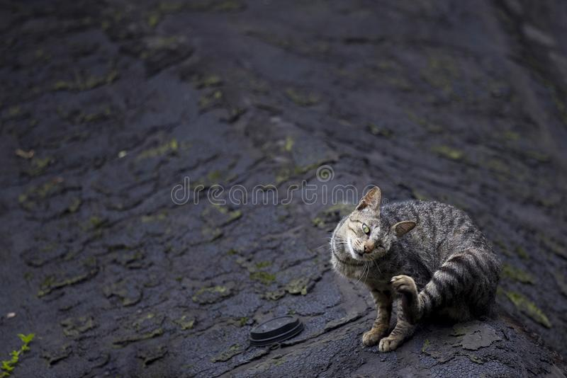 Chaton mignon photo stock