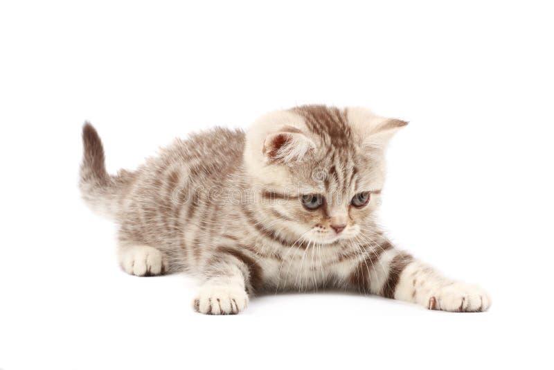 chaton mignon photos stock