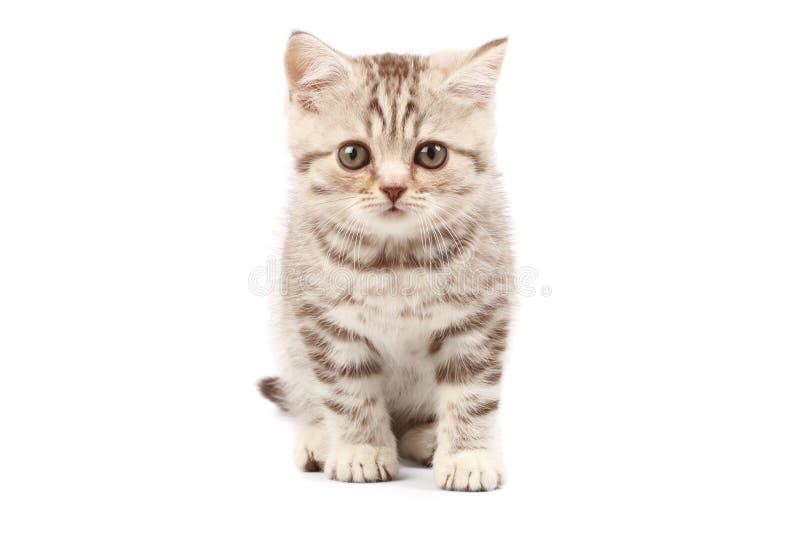 chaton mignon image stock