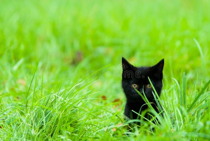 Chaton mignon dans l'herbe photo stock