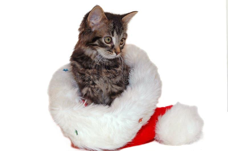 Chaton mignon de Noël photographie stock libre de droits
