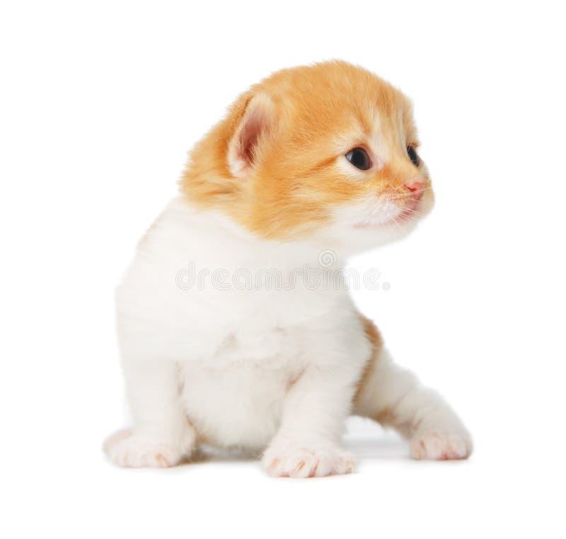 Chaton mignon de rouge orange d'isolement image libre de droits