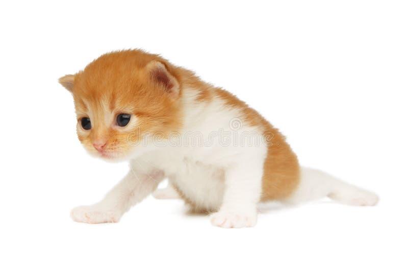 Chaton mignon de rouge orange d'isolement photos stock