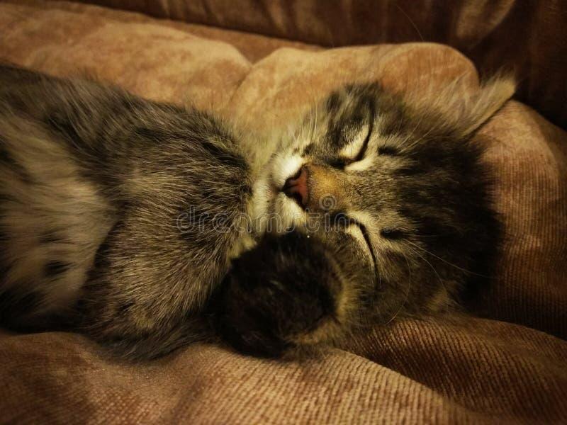 chaton mignon dormant sur le sien de retour sur un divan mou images stock
