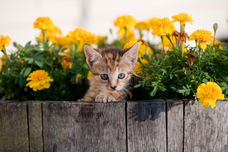 Chaton mignon en fleurs image stock