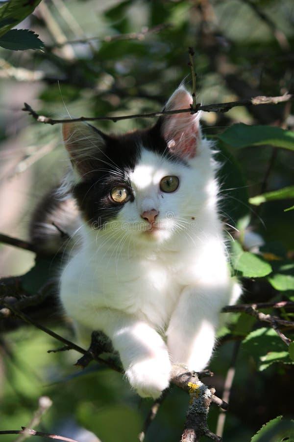 Chaton mignon se reposant sur la branche d'arbre photos stock