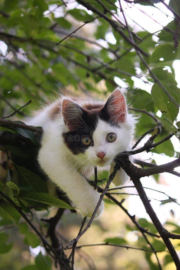 Chaton mignon se reposant sur la branche d'arbre photos libres de droits