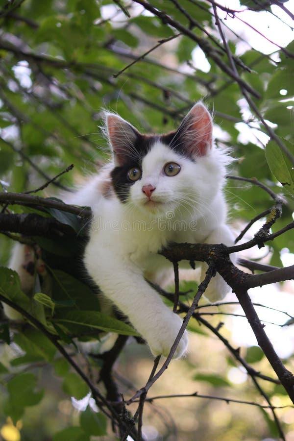 Chaton mignon se reposant sur la branche d'arbre photographie stock