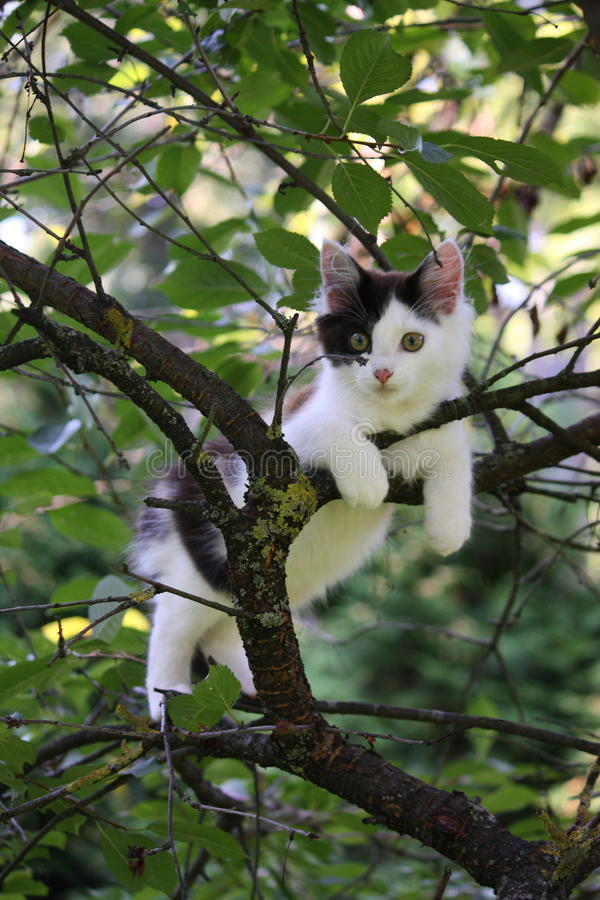 Chaton mignon se reposant sur la branche d'arbre image stock
