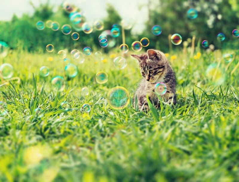 Chaton mignon sur l'herbe d'été photographie stock libre de droits