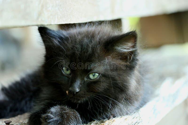 Chaton noir étant paresseux photos stock