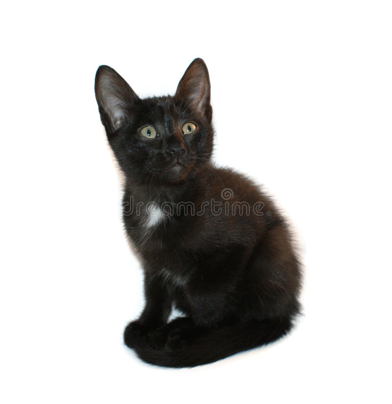 Chaton noir 2 photo stock