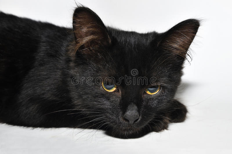 Chaton noir image stock