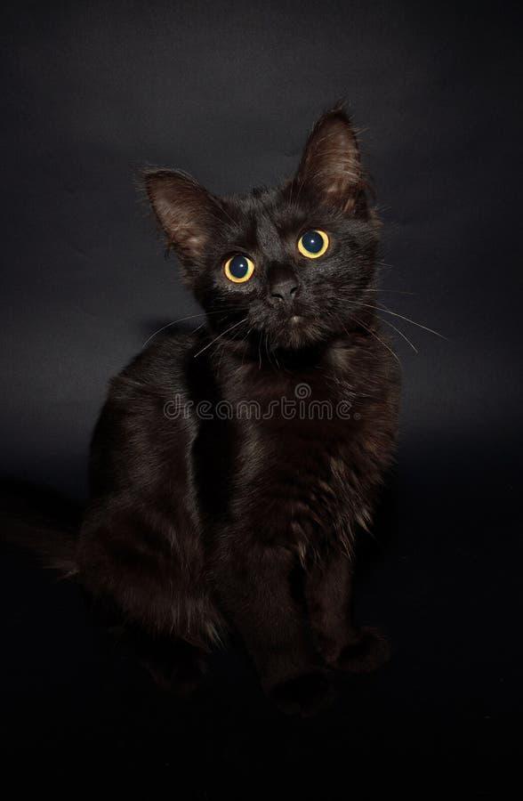 Chaton noir photos libres de droits