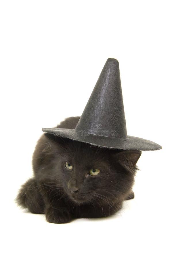 Chaton noir avec le chapeau de sorcière pour veille de la toussaint images stock