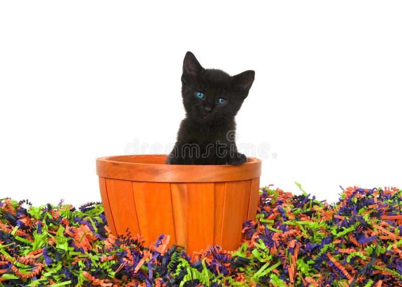 Chaton noir dans le panier orange dans la pile des confettis de Halloween photos stock