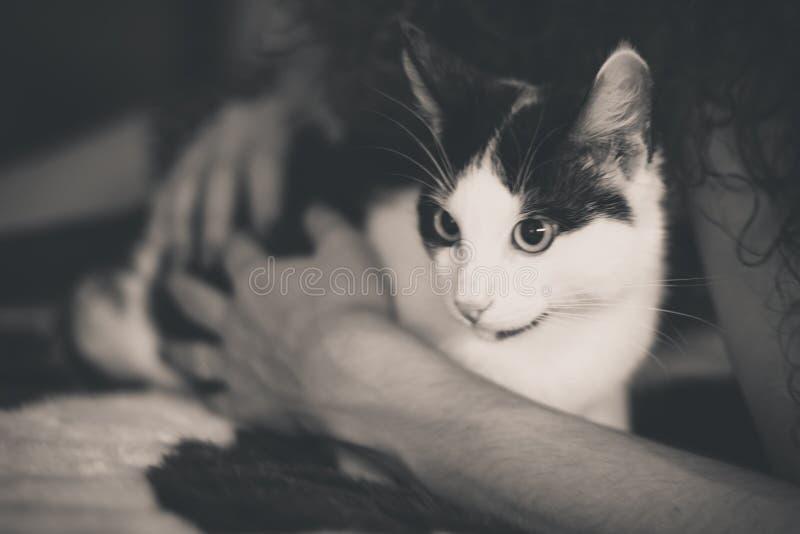Chaton noir et blanc avec les yeux verts, photo modifiée la tonalité chaude image libre de droits