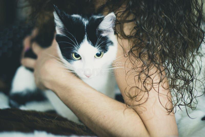 Chaton noir et blanc avec les yeux verts, photo modifiée la tonalité chaude photographie stock