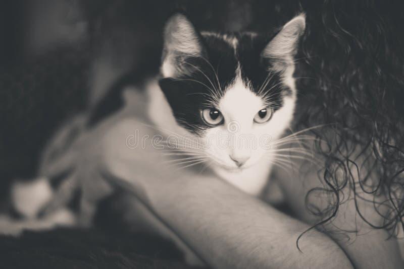 Chaton noir et blanc avec les yeux verts, photo modifiée la tonalité chaude images stock