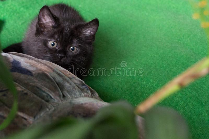 Chaton noir mignon disposant à sauter photos stock