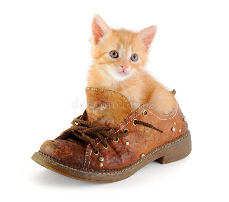 Chaton rouge dans la chaussure photographie stock