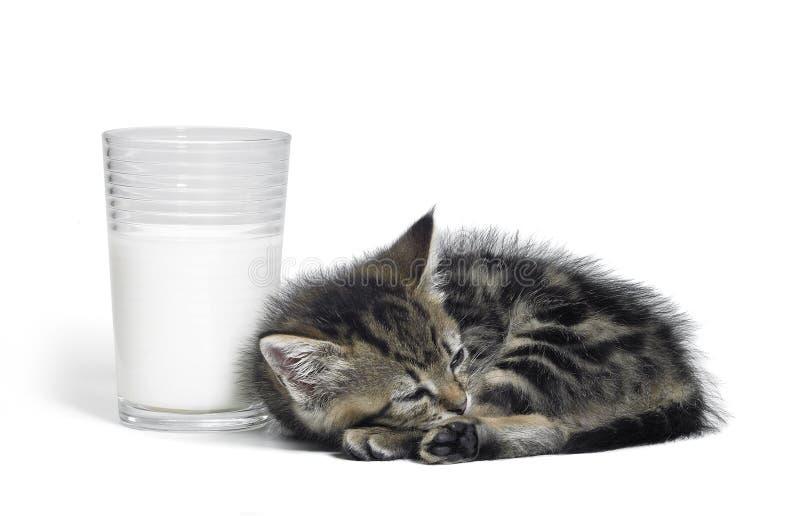 Chaton sans compter qu'un verre de lait photos stock