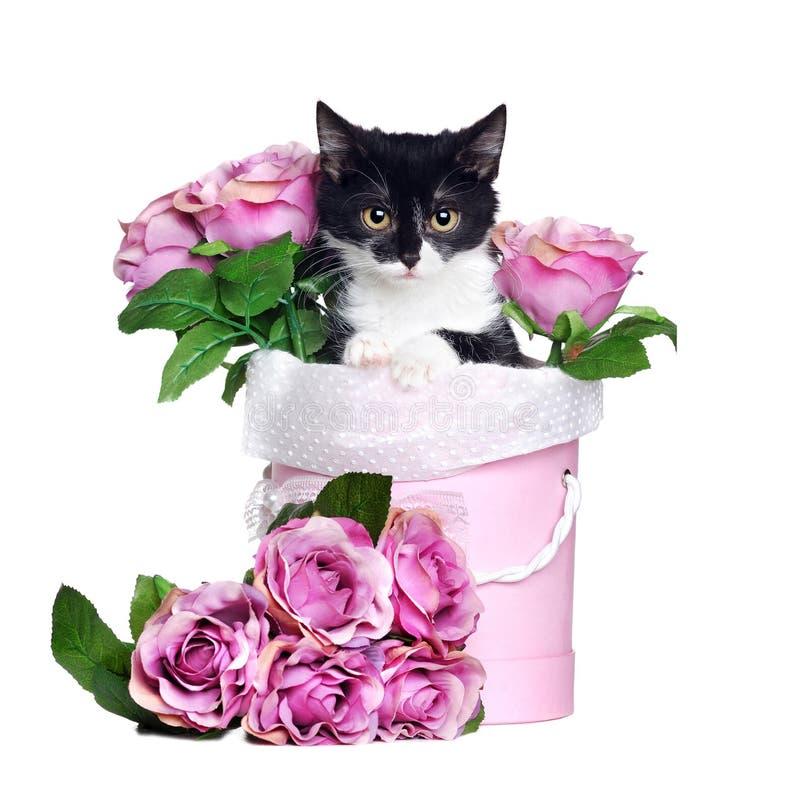 Chaton se reposant dans un boîte-cadeau de fleurs d'isolement sur le Ba blanc image stock