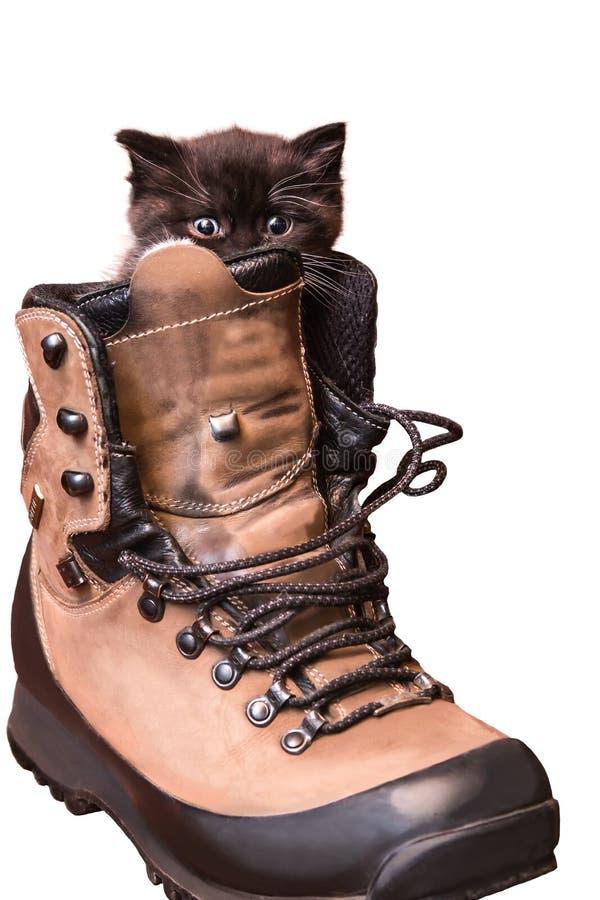 Chaton se reposant dans une chaussure image stock