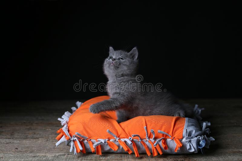 Chaton se reposant sur un oreiller orange, fond noir photos stock