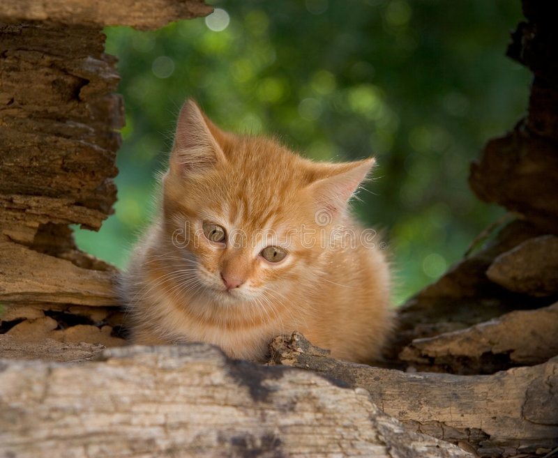 Chaton songeur photographie stock