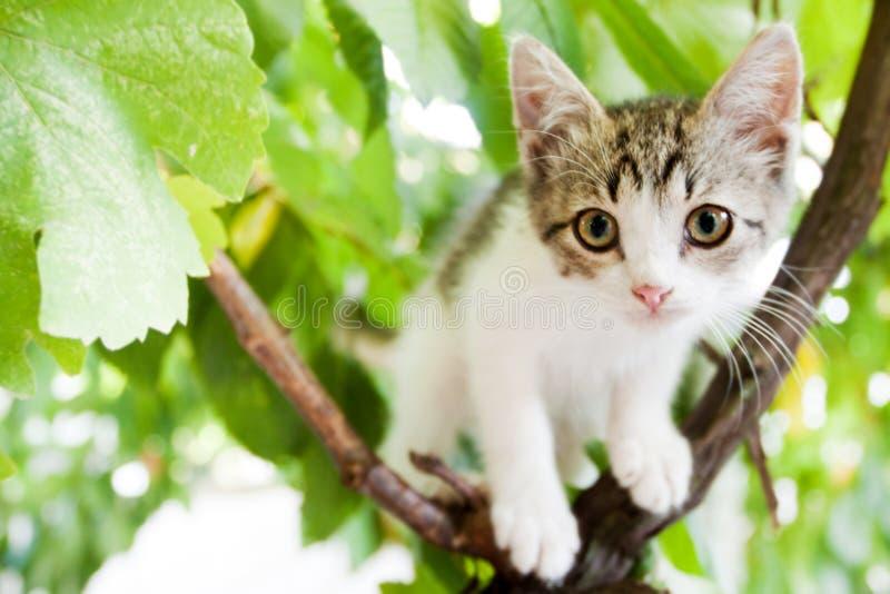 Chaton sur l'arbre photo libre de droits