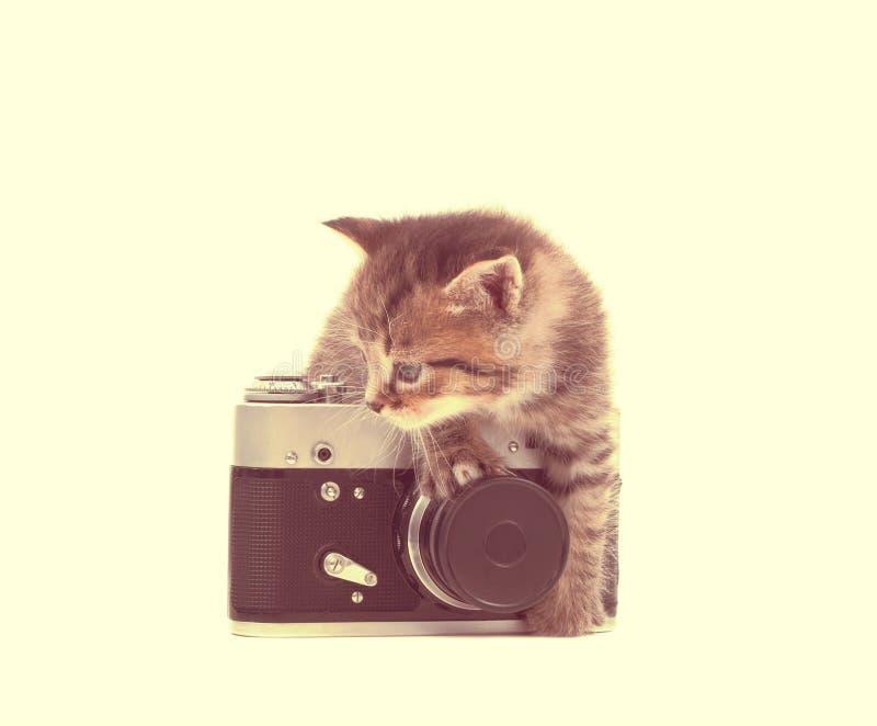 chaton tigré et un appareil-photo photos stock