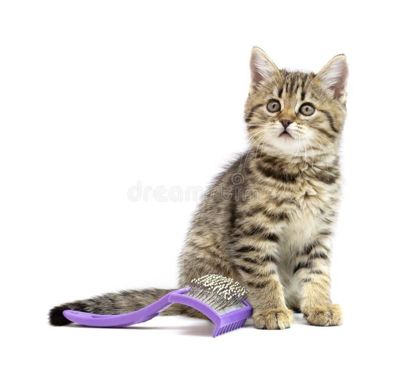 Chaton tigré se reposant près du peigne d'animal familier et regardant à la caméra d'isolement sur le blanc Coiffure de chat, se  photo libre de droits