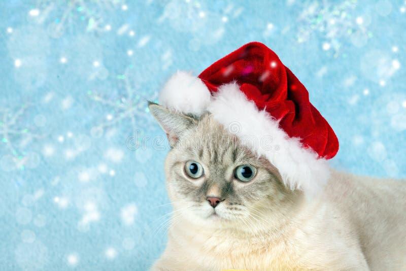 Chaton utilisant le chapeau de Santa images libres de droits